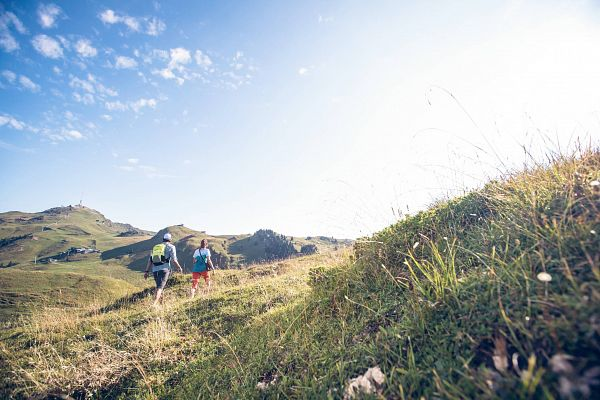 Wanderregion Kitzbühel | Wanderweg mit Alpenblumen-Panorama